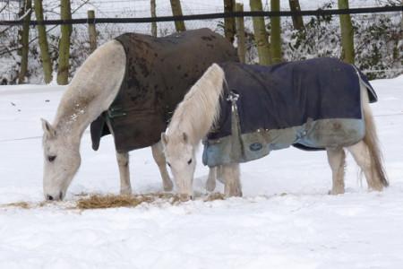 Winter-Pferde