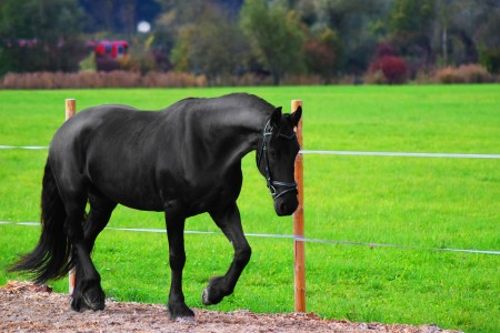 pixabay_horse-1437056_dw-lifestylefotografie