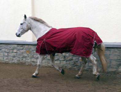 Ratgeber-Pferdedecken